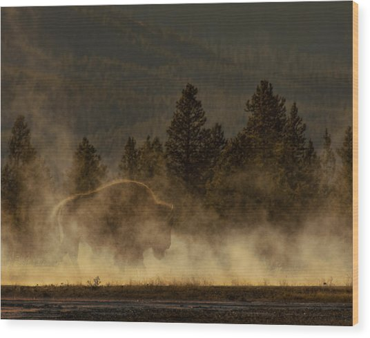 Bison In The Mist Wood Print