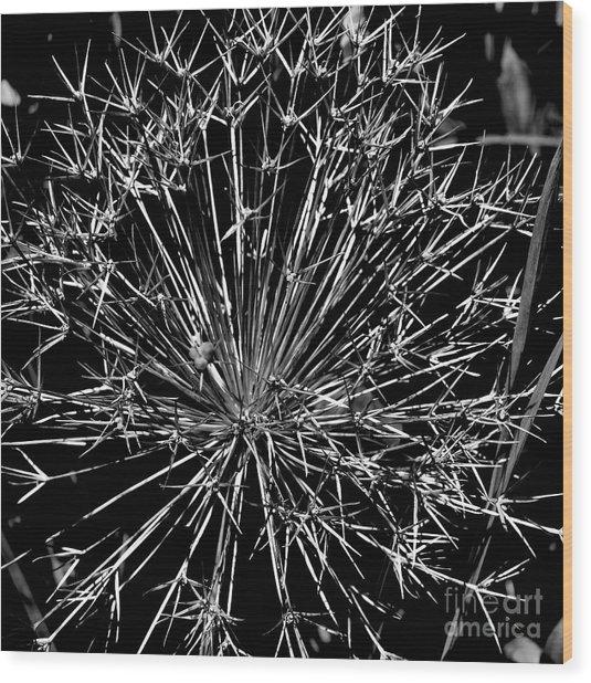 Black And White Allium  2 Wood Print by Tanya  Searcy