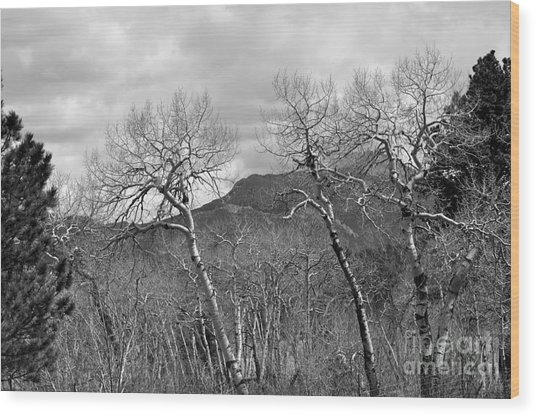 Black And White Aspen Wood Print