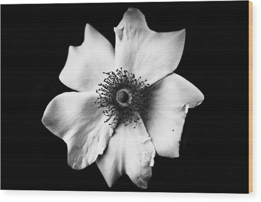 Black And White Flower Wood Print