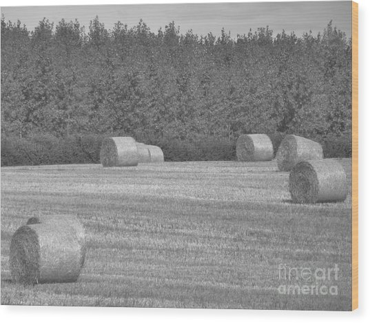 Black And White Hay Bales Wood Print by Andrew May