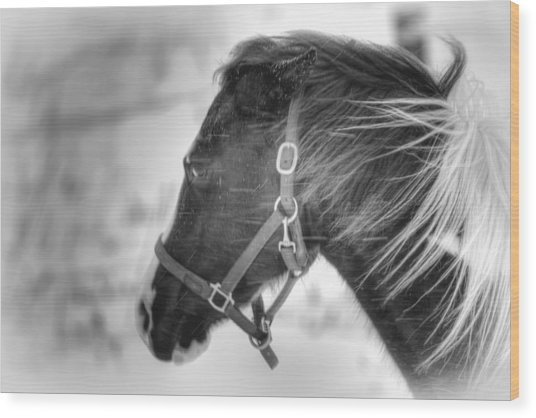 Black And White Horse Portrait Wood Print by Gary Smith