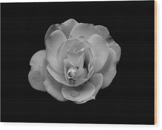 Black And White Rose Wood Print