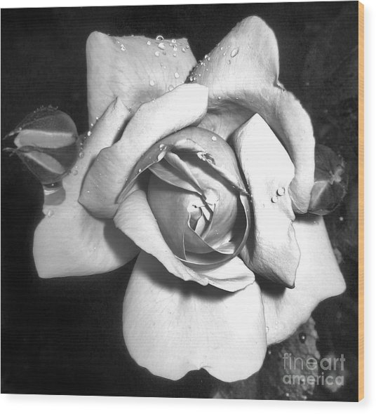 Black And White Rose Wood Print by Tina Ann Byers