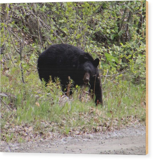 Black Bear Wood Print by Mark Caldwell
