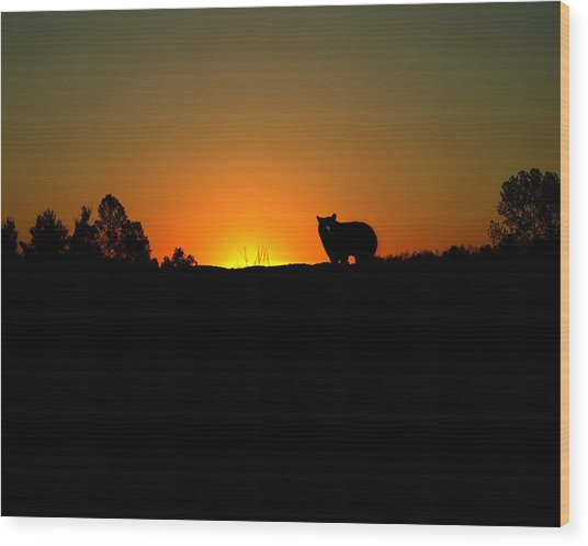 Black Bear Sunset Wood Print