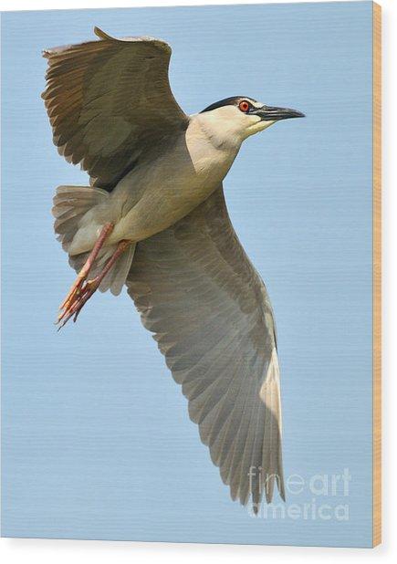 Black Crown Night Heron Wood Print