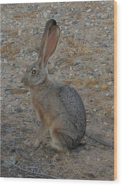 Black Eared Jack Rabbit Wood Print