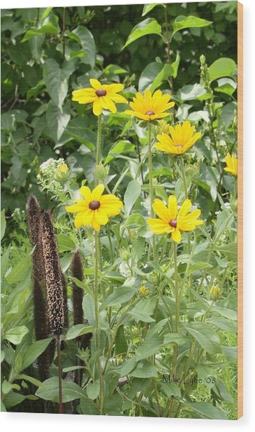 Black Eyed Susan I Wood Print by Mike Lytle