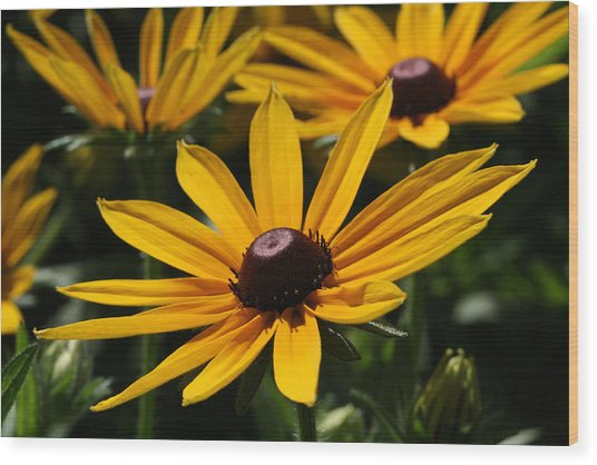 Black Eyed Susan Wood Print