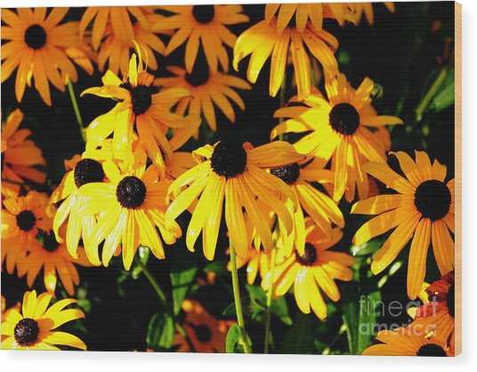 Black Eyed Susans Wood Print by Theresa Willingham