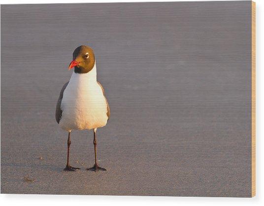 Black Headed Gull Wood Print