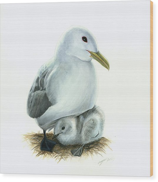 Black-legged Kittiwake Parent And Chick Wood Print by Logan Parsons