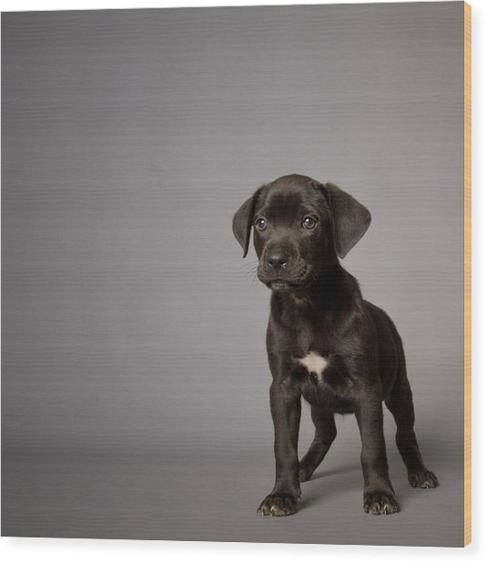 Black Puppy Wood Print