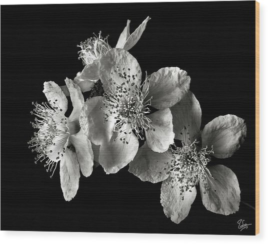 Blackberry Flowers In Black And White Wood Print