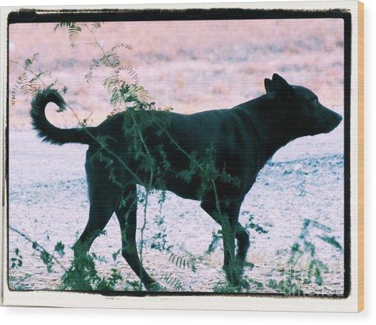 Blackdog Wood Print