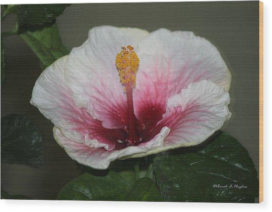 Blood Red Hibiscus  Wood Print