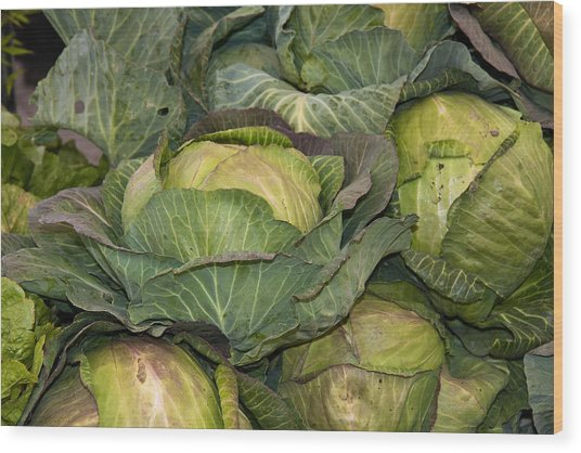 Blooming Cabbage Heads Wood Print by Dina Calvarese