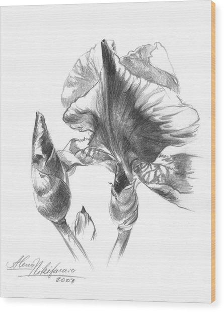 Blooming Iris  Wood Print