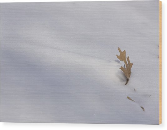 Blown Snow And Oak Leaf Wood Print
