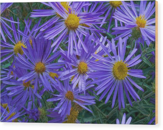 Blue Asters Wood Print