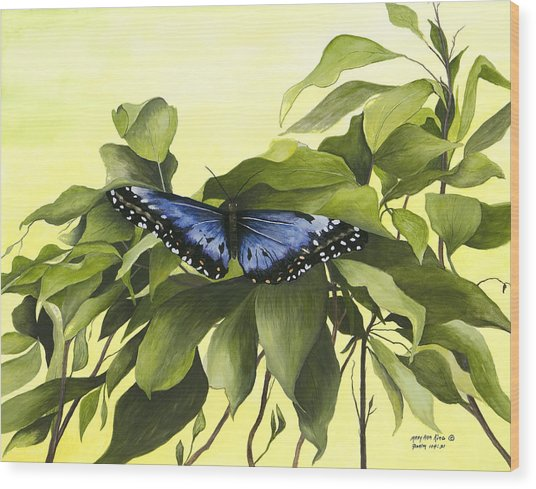 Blue Butterfly Of Branson Wood Print