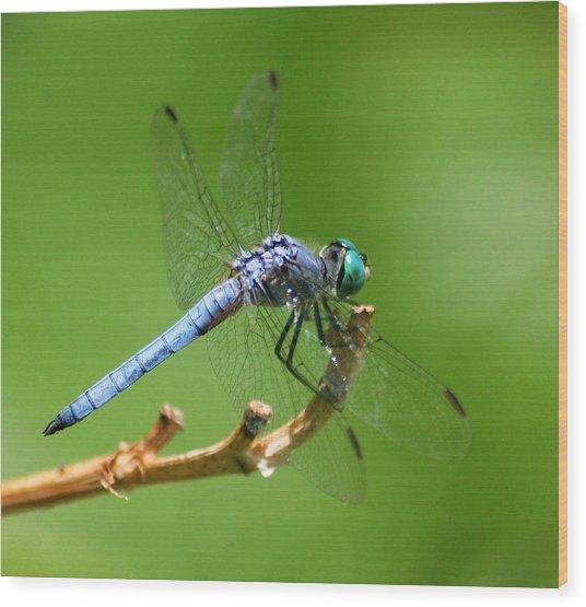 Blue Dragonfly Start Up Wood Print by Meeli Sonn