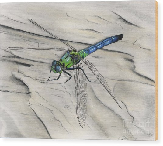 Blue-green Dragonfly Wood Print