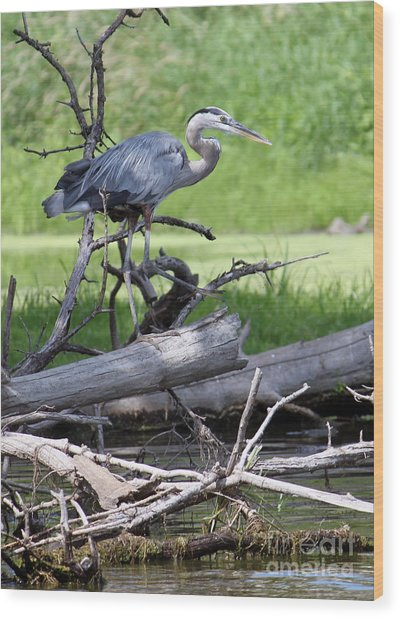 Blue Heron At The Lake Wood Print