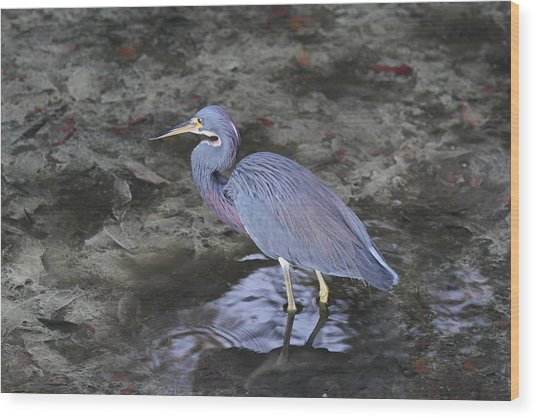 Blue Heron In Estero Bay Wood Print by Juergen Roth