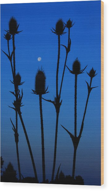 Blue Moon Thistle Wood Print