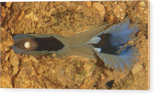 Blue Mussel Buried Wood Print