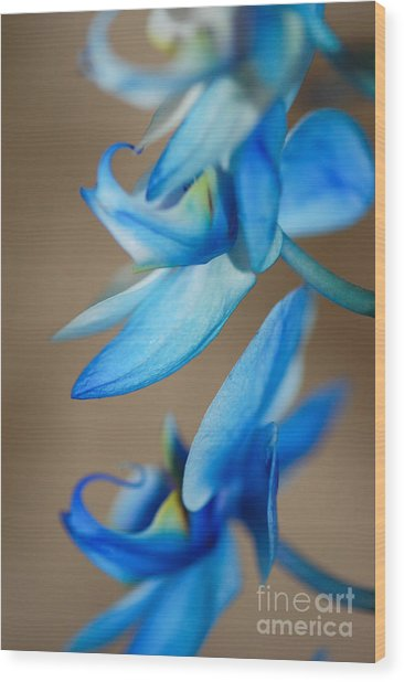 Blue Orchid  Wood Print by Melissa Haley