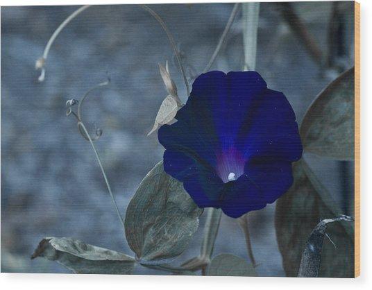 Blue Petunia 2 Wood Print