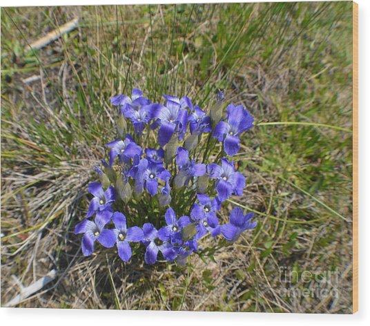 Blue-purple Damsels Wood Print by Roxann Whited