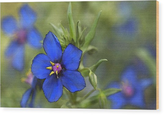 Blue Royalty Wood Print by Beverly Hanson