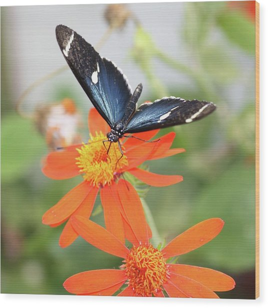 Blue Sara On Orange Sunflower Wood Print by Andrea  OConnell