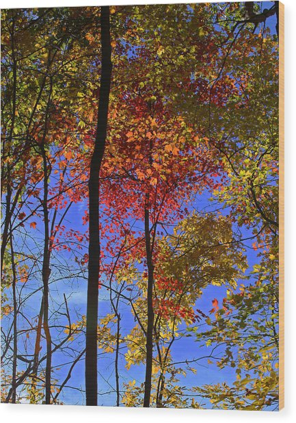 Blue Sky Autumn Wood Print