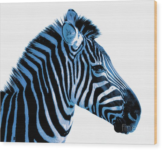 Blue Zebra Art Wood Print