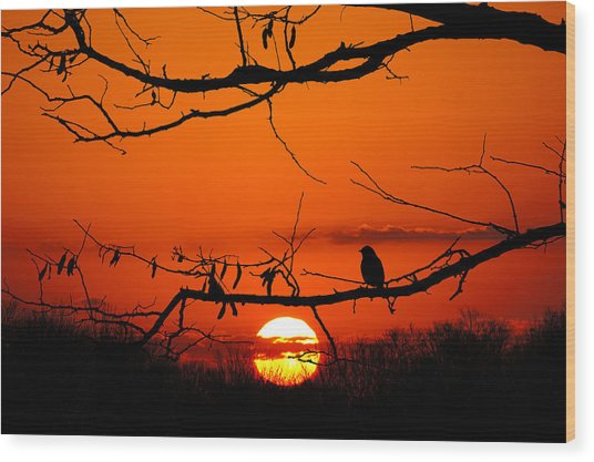 Bluebird Dawn Wood Print