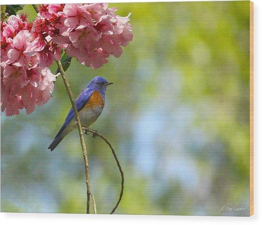 Bluebird In Cherry Tree Wood Print