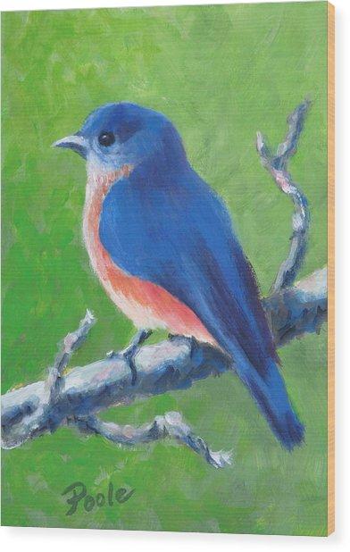 Bluebird In Spring Wood Print