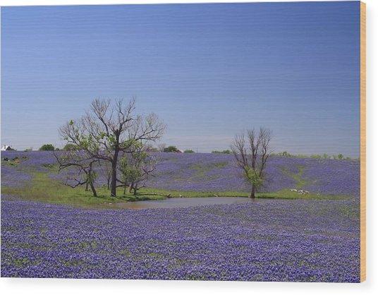Bluebonnet Acres Wood Print