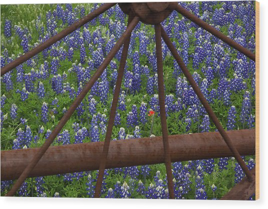 Bluebonnets And Rusted Iron Wheel Wood Print