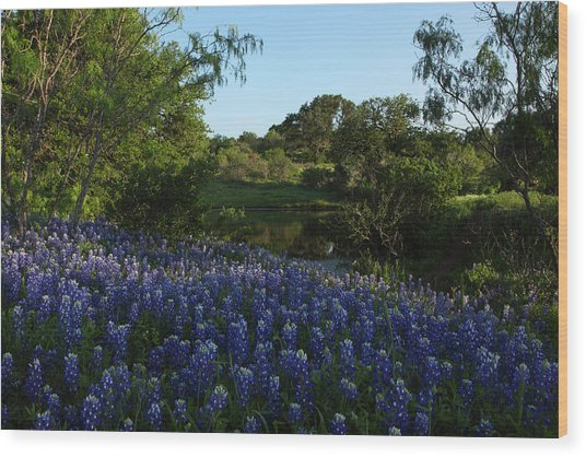 Bluebonnets At The Pond Wood Print