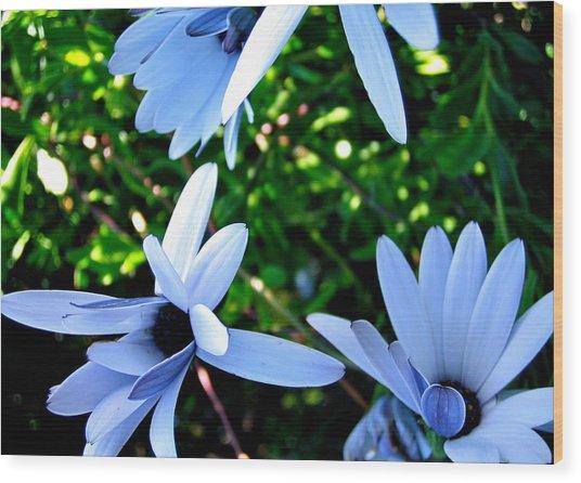 Bluey Twinkles Wood Print by HweeYen Ong