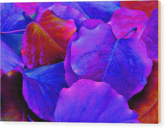 Bluish Purple And Pink Leaves Wood Print by Sheila Kay McIntyre