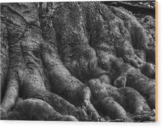 Body Of Tree Roots Wood Print