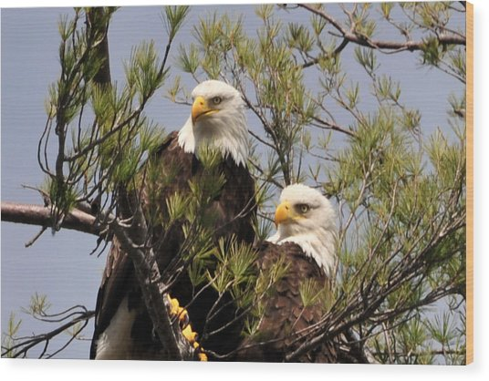 Bog River Eagles Close Up  Wood Print