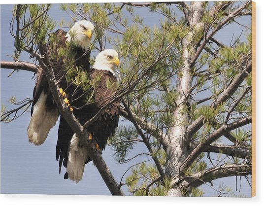 Bog River Eagles  Wood Print